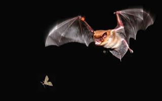 Benefits Of Bats West Texas Bat Group